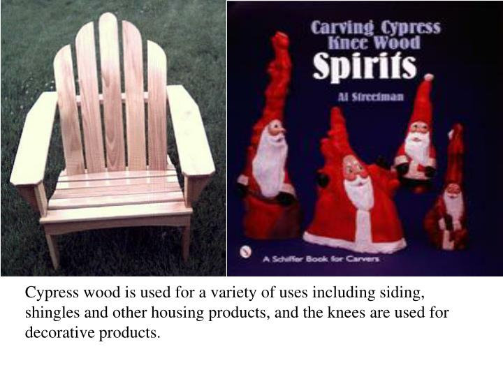 Cypress wood is used for a variety of uses including siding, shingles and other housing products, and the knees are used for decorative products.