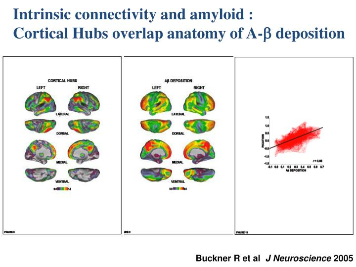 Intrinsic connectivity and amyloid :