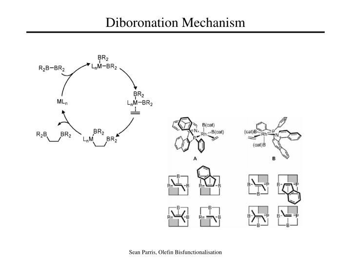 Diboronation Mechanism
