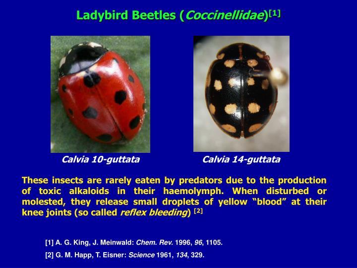 Ladybird Beetles (