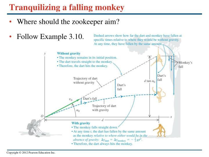 Tranquilizing a falling monkey