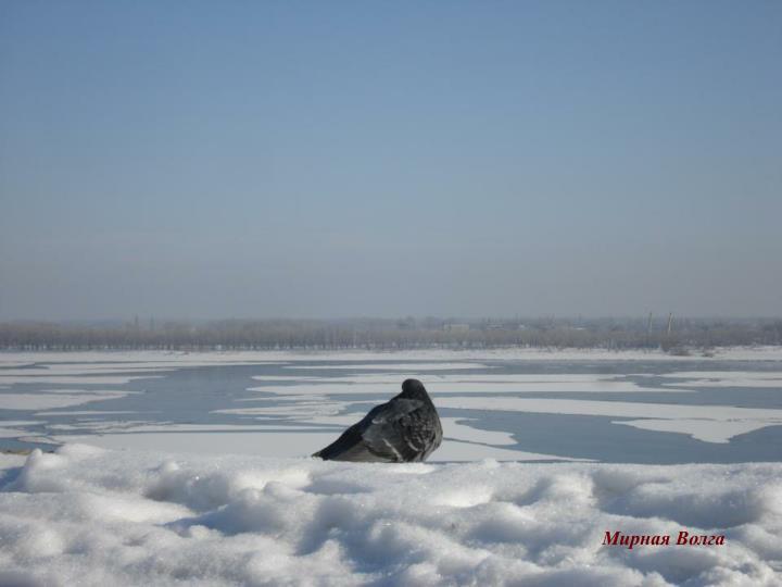 Мирная Волга