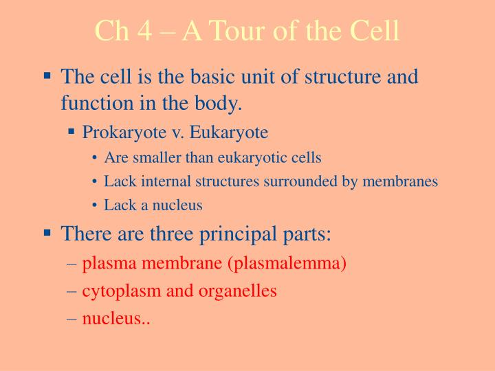 ch 4 a tour of the cell