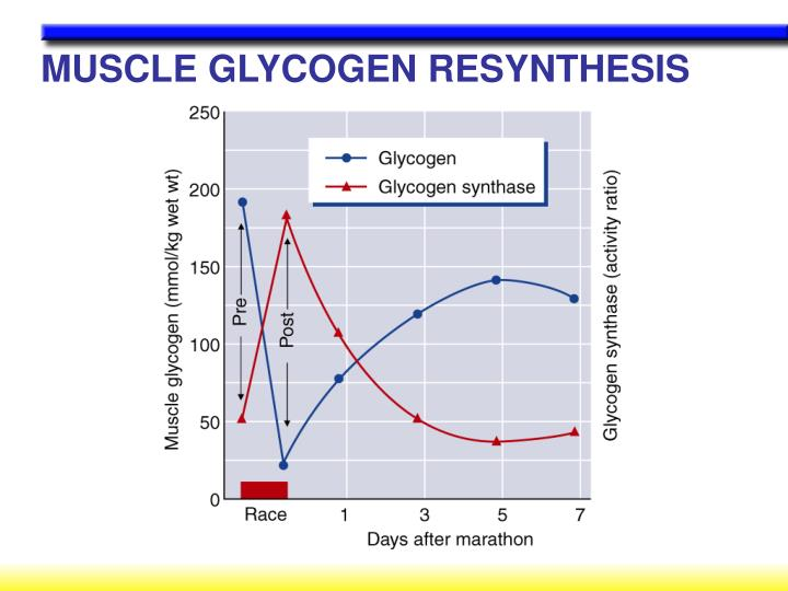 MUSCLE GLYCOGEN RESYNTHESIS