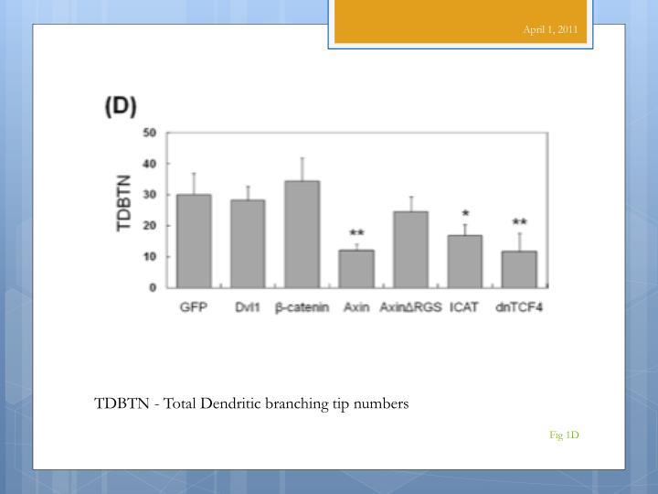 TDBTN - Total Dendritic branching tip numbers
