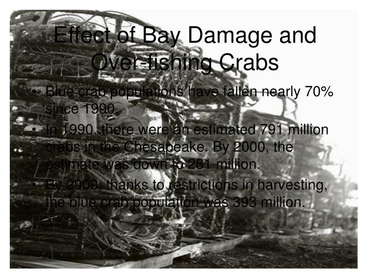 Effect of Bay Damage and Over-fishing Crabs