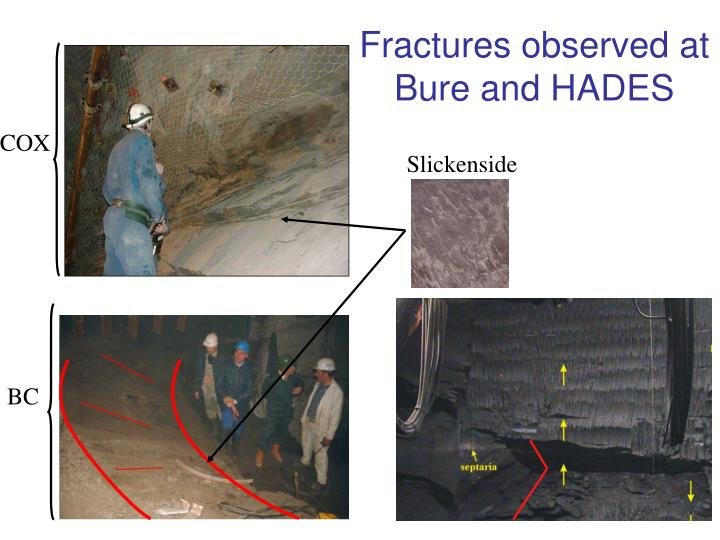 Fractures observed at Bure and HADES
