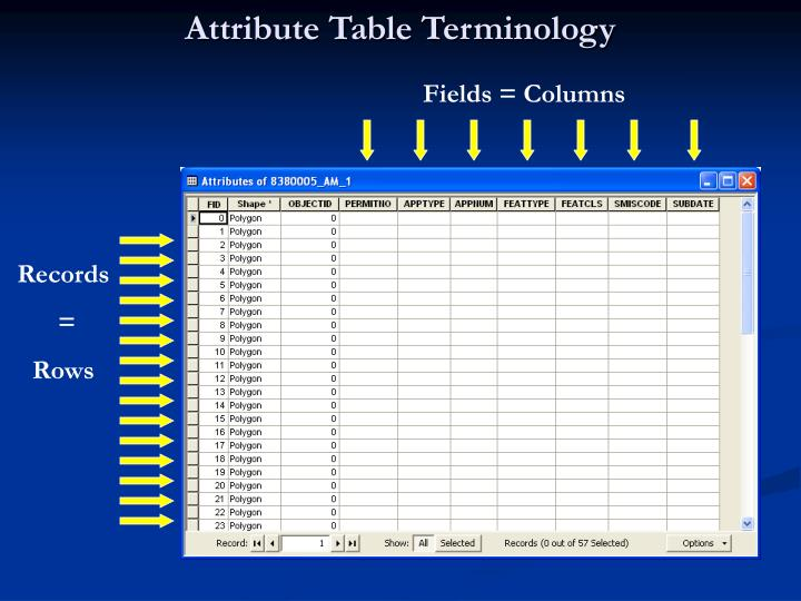 Attribute Table Terminology
