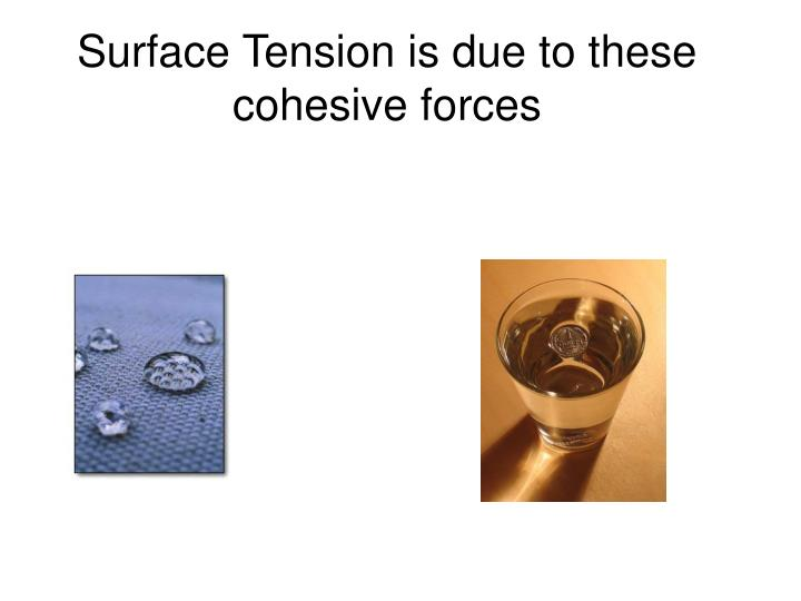 Surface Tension is due to these cohesive forces
