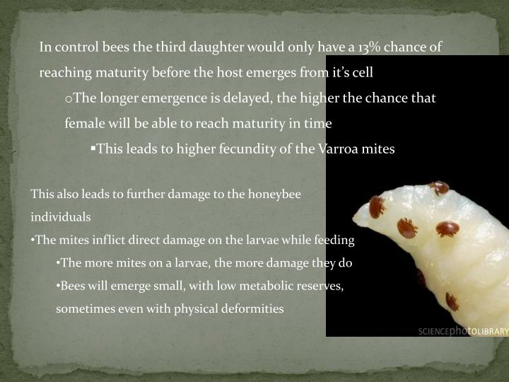 In control bees the third daughter would only have a 13% chance of reaching maturity before the host emerges from it's cell