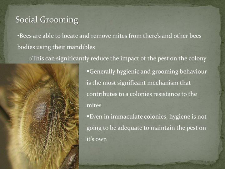 Social Grooming