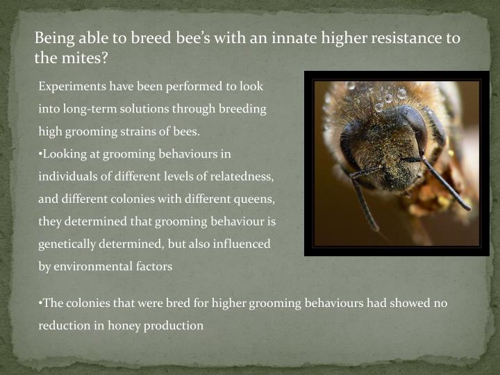 Being able to breed bee's with an innate higher resistance to the mites?
