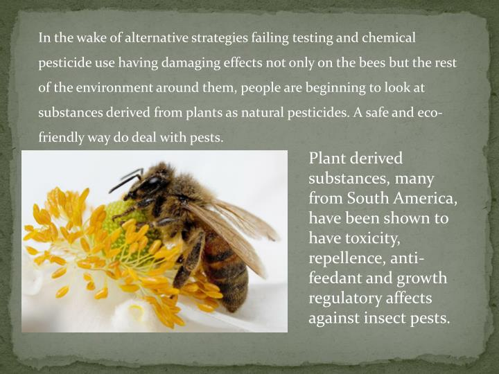 In the wake of alternative strategies failing testing and chemical pesticide use having damaging effects not only on the bees but the rest of the environment around them, people are beginning to look at substances derived from plants as natural pesticides. A safe and eco-friendly way do deal with pests.