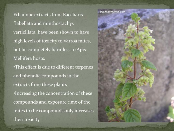 Ethanolic extracts from Baccharis flabellata and minthostachys verticillata  have been shown to have high levels of toxicity to Varroa mites, but be completely harmless to Apis Mellifera hosts.