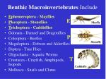 benthic macroinvertebrates include