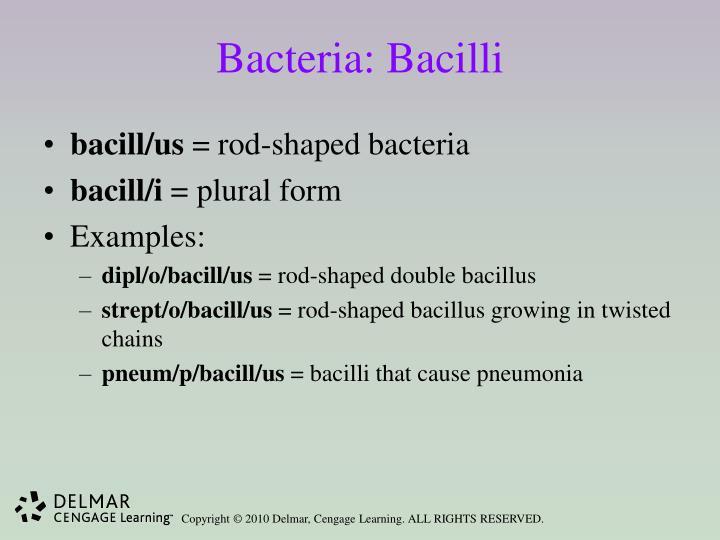 Bacteria: Bacilli