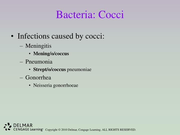 Bacteria: Cocci