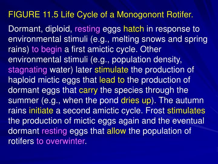 FIGURE 11.5 Life Cycle of a Monogonont Rotifer.