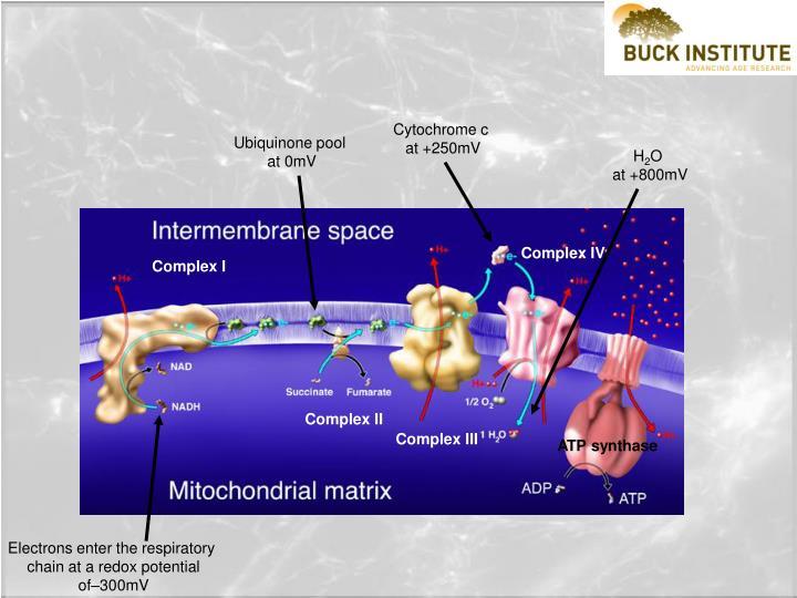 Cytochrome c