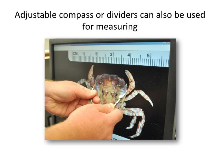 Adjustable compass or dividers can also be used for measuring