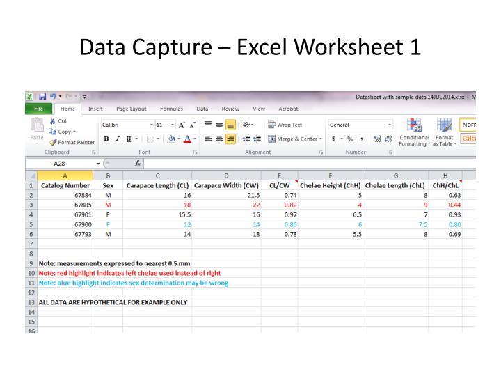 Data Capture – Excel Worksheet 1