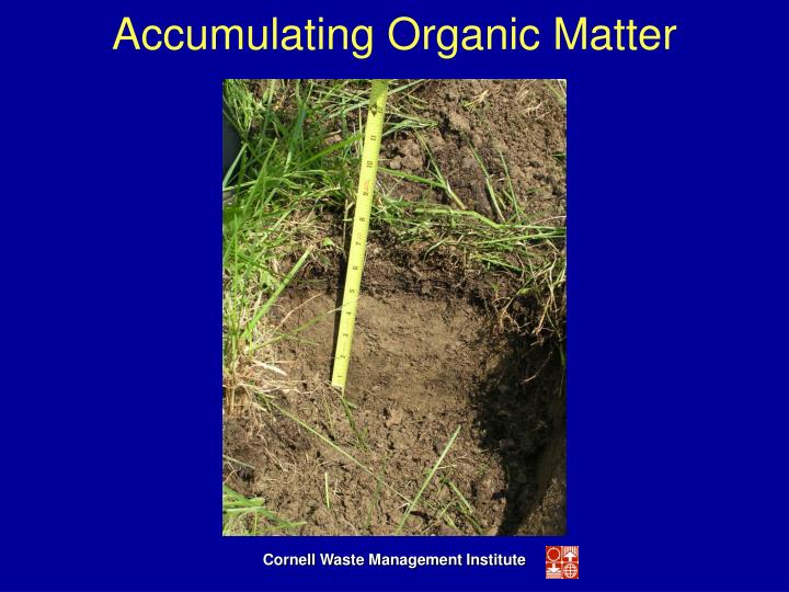 Accumulating Organic Matter