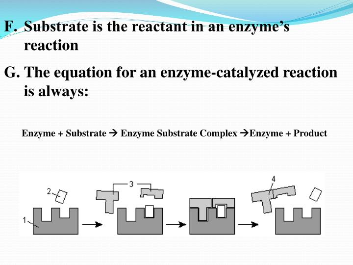 Substrate is the reactant in an enzyme's reaction