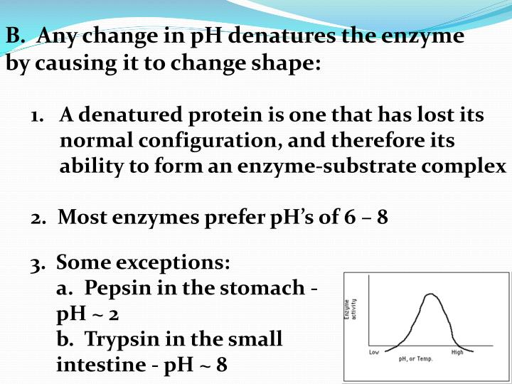 B.  Any change in pH denatures the enzyme