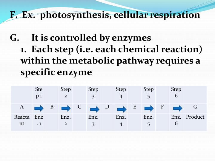 Ex.  photosynthesis, cellular respiration