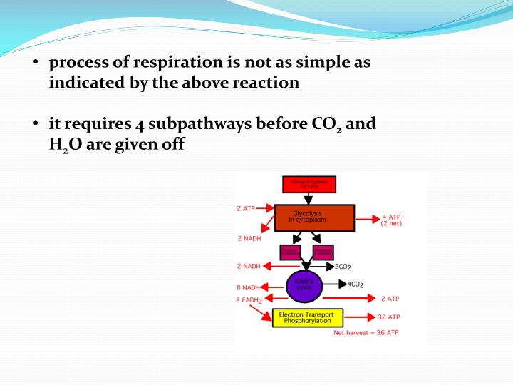 process of respiration is not as simple as indicated by the above reaction