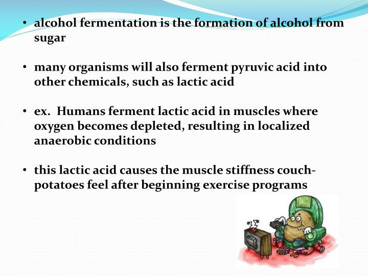 alcohol fermentation is the formation of alcohol from sugar