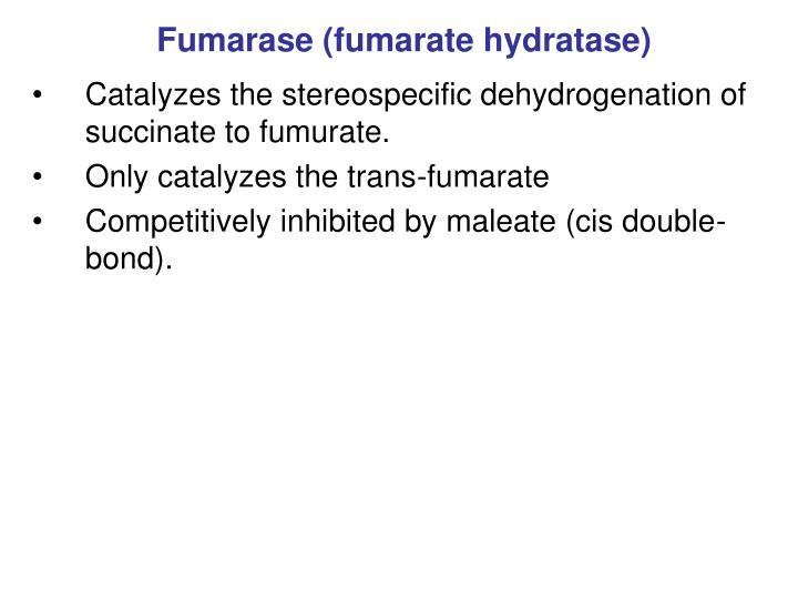 Fumarase (fumarate hydratase)