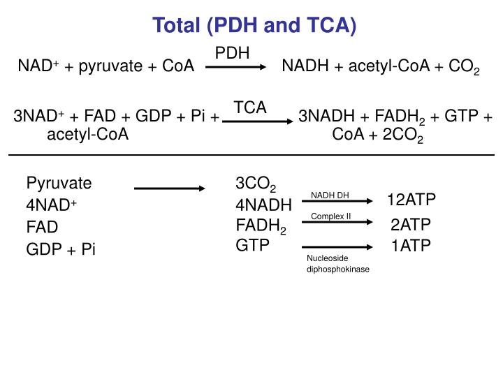 Total (PDH and TCA)