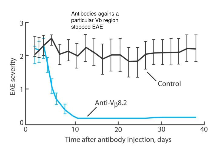 Antibodies agains a particular Vb region stopped EAE