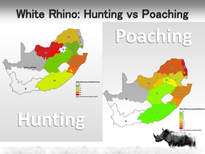 White Rhino: Hunting