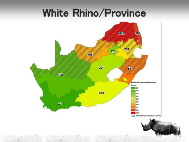 White Rhino/Province