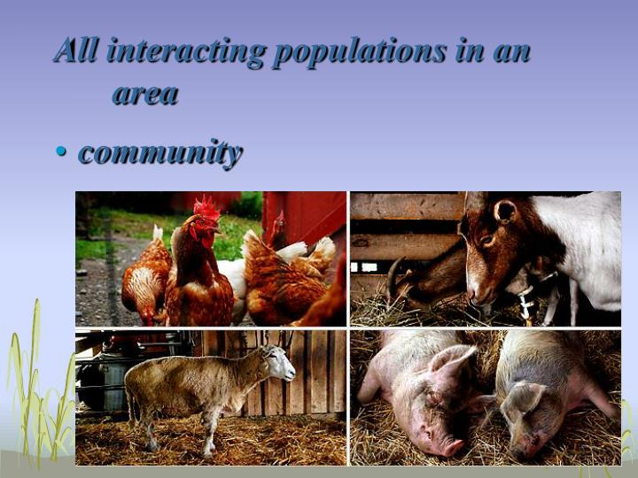 All interacting populations in an area