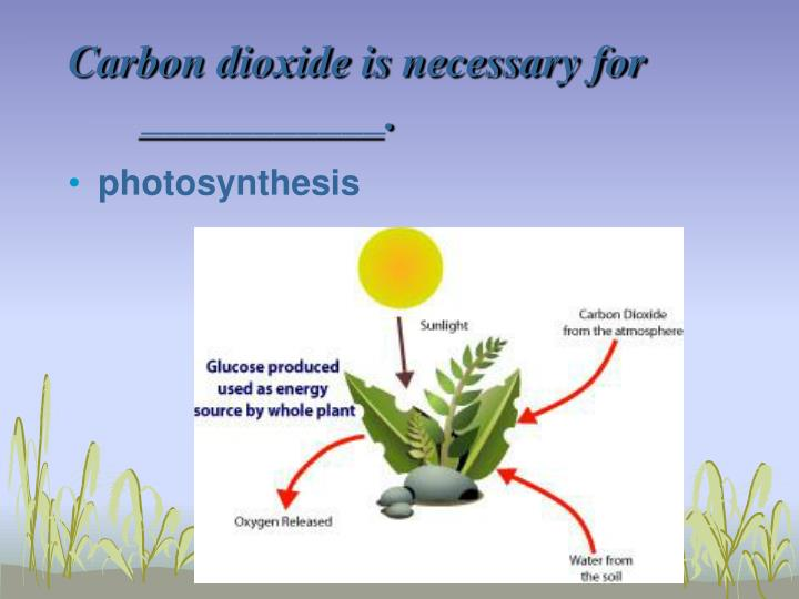 Carbon dioxide is necessary for ___________.