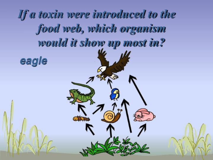 If a toxin were introduced to the food web, which organism would it show up most in?