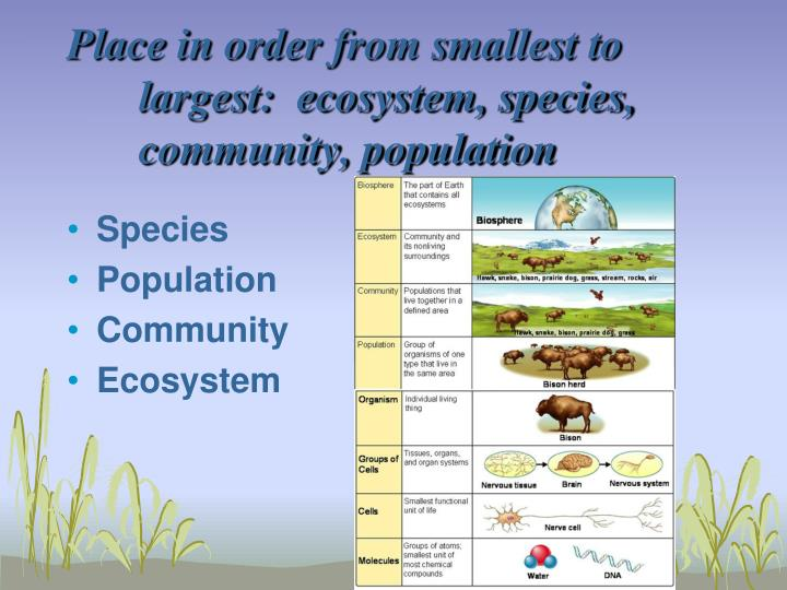 Place in order from smallest to largest:  ecosystem, species, community, population