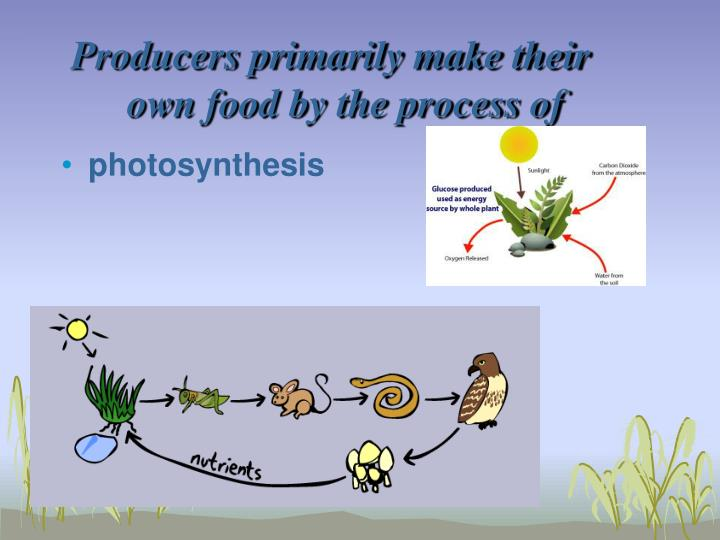 Producers primarily make their own food by the process of