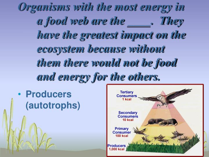 Organisms with the most energy in a food web are the ____.  They have the greatest impact on the ecosystem because without them there would not be food and energy for the others.