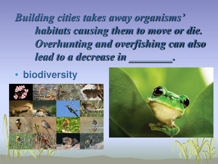 Building cities takes away organisms'  habitats causing them to move or die.  Overhunting and overfishing can also lead to a decrease in ________.