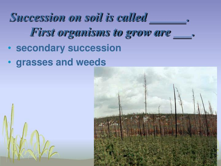 Succession on soil is called ______.  First organisms to grow are ___.