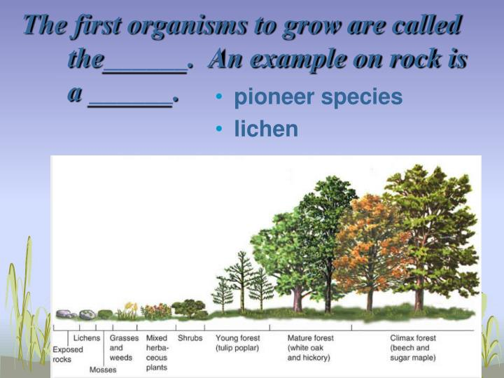 The first organisms to grow are called the______.  An example on rock is a ______.