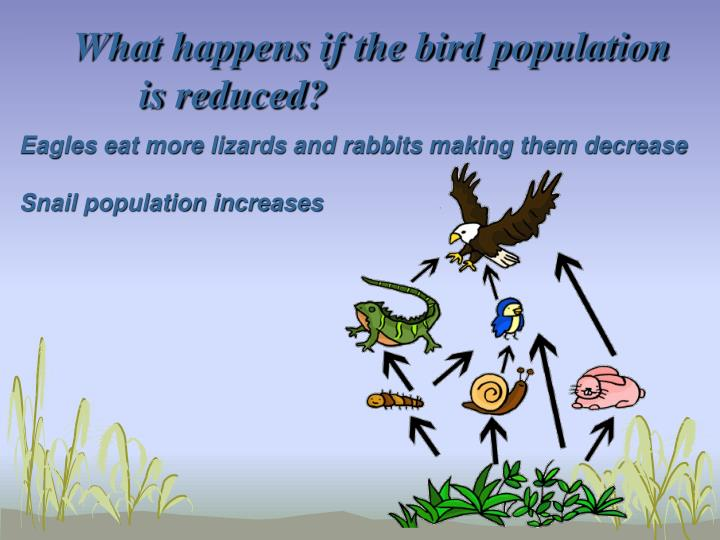 What happens if the bird population is reduced?