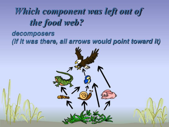 Which component was left out of the food web?
