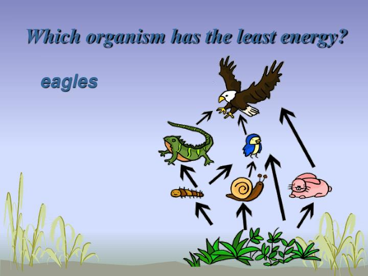 Which organism has the least energy?