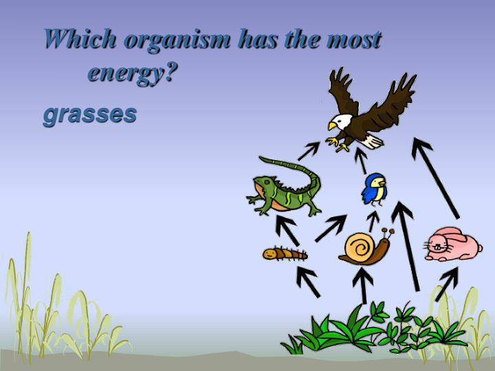 Which organism has the most energy?