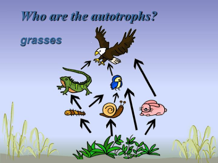 Who are the autotrophs?